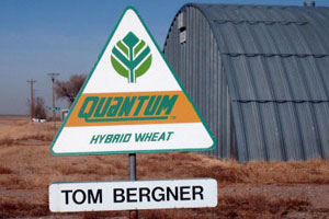 Tom Bergner Seeds